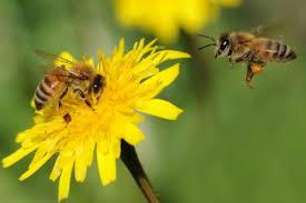 Sostenibilità. Difendiamo le api.